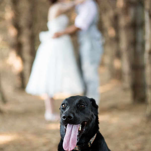 Bride and groom posing with dog in foreground