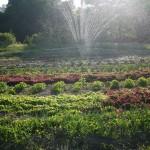 roaring run gardens