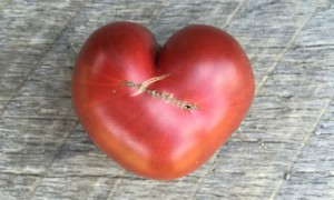 How to Grow Your Own Heirloom Tomatoes Workshop