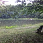pond-and-bench