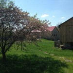 farm scenery